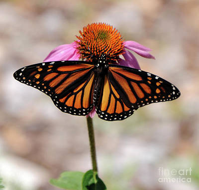Photograph - Monarch by Ronald Grogan