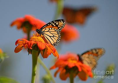 Photograph - Monarch World by Living Color Photography Lorraine Lynch