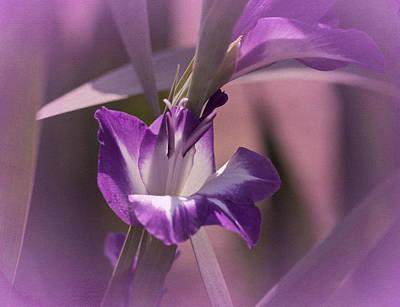 Purple Gladiolas Photograph - Monday's Gladiola No. 2 by Richard Cummings