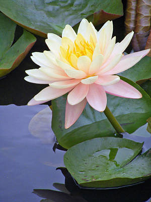 Photograph - Monet's Waterlily by Carol Bruno