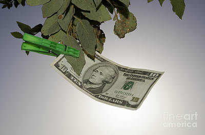 Money Hanging In A Tree Art Print