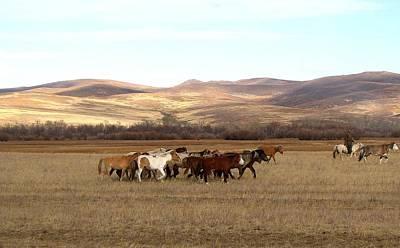 Mongolian Horses Art Print by Diane Height