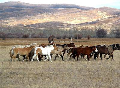 Photograph - Mongolian Horses II by Diane Height