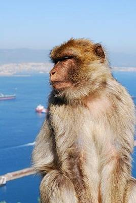 Photograph - Monkey Around In Gibralter by Catherine Kurchinski