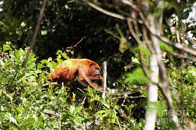 Photograph - Monkey In The Trees by John Burns