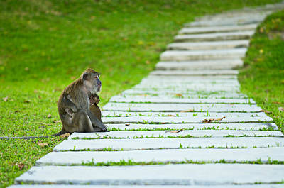 Rock Royalty - Monkey mother with baby resting on a walkway by U Schade
