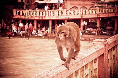 Ashram Wall Art - Photograph - Monkey On Bridge by John Battaglino