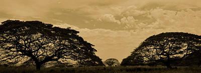 Monkeypod Trees Art Print