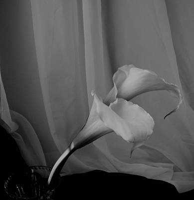 Photograph - Monochrome Calla Lilies by Lynnette Johns