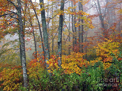 Scifi Portrait Collection - Monongahela National Forest Autumn by Thomas R Fletcher