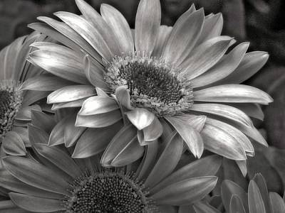 Photograph - Monotone Togetherness  by Chris Anderson