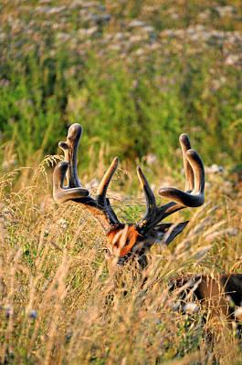 Bucks In Velvet Photograph - Monster Emerging by Emily Stauring