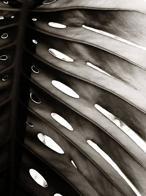 Photograph - Monstera 2 by Marilyn Hunt