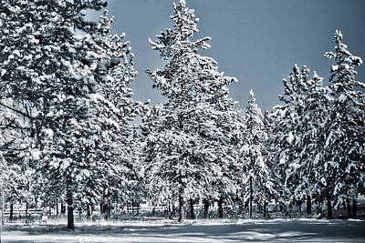 Art Print featuring the photograph Montana Christmas by Janie Johnson