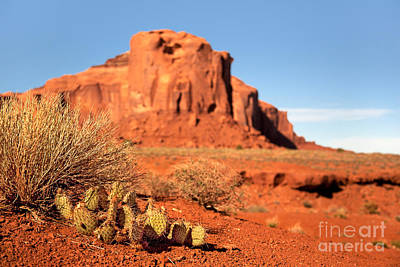 Monument Valley Cactus Art Print by Jane Rix