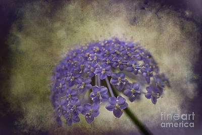 Photograph - Moody Blue by Clare Bambers