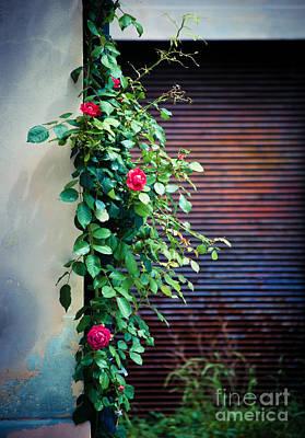 Moody Roses Art Print by Silvia Ganora