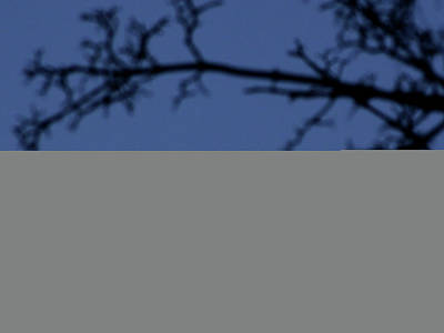 Focus On Background Photograph - Moon And Branches by Christoph Hetzmannseder