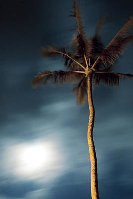 Ashlee Meyer Photograph - Moon And Palm by Ashlee Meyer