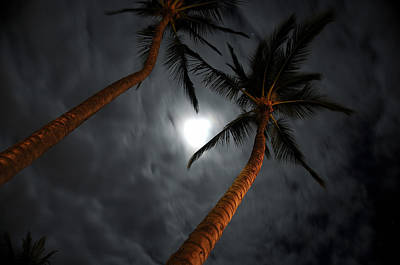 Moon And Palms Art Print by George Crawford
