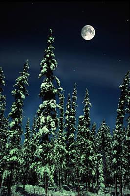 Snowy Night Photograph - Moon And Trees, Teslin, Yukon by Robert Postma