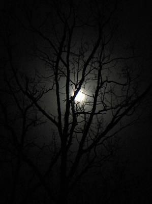 Moon Branches Art Print by Jennifer Compton