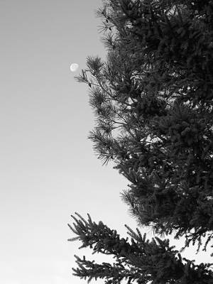 Photograph - Moon By Pine Trees by Kent Lorentzen