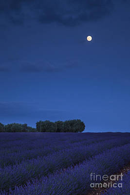 Photograph - Moon Over Lavender by Brian Jannsen