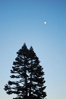 Yosemite Photograph - Moon Over Pines At Yosemite by Twenty Two North Photography