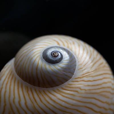 Spiral Photograph - Moon Shell by Carol Leigh