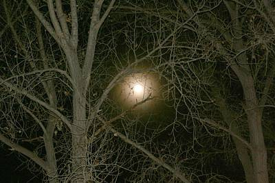 Print featuring the photograph Moon Through The Trees by Laurel Talabere