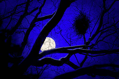 Art Print featuring the photograph Moon Wood  by Richard Piper
