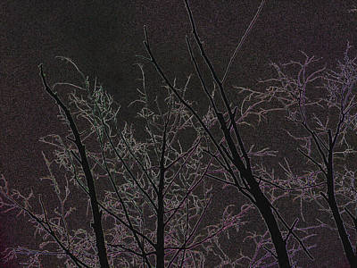 Photograph - Moonlight I by Katharine Birkett