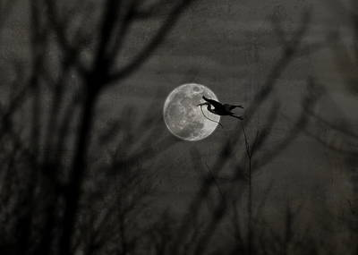 Photograph - Moonlight Provision by Emily Stauring