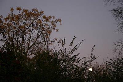 Moonlight Sonata Photograph - Moonlight Sonata by Nina Fosdick