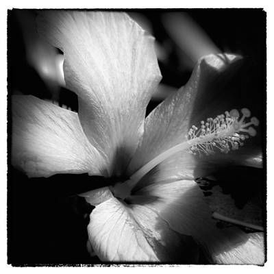 Nature Photograph - Moonlit Blossom by David Patterson