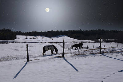 Photograph - Moonlit Horses by Larry Landolfi