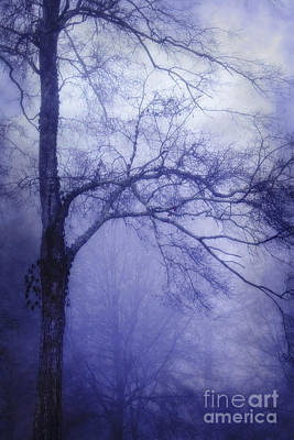 Photograph - Moonlit Tree by Judi Bagwell
