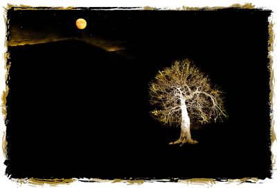 Moonlit Night Photograph - Moonlit Tree by Mal Bray