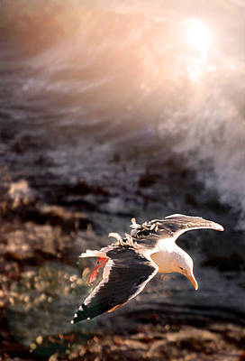 Print featuring the photograph Moonstone Beach Seagull by Michael Rock