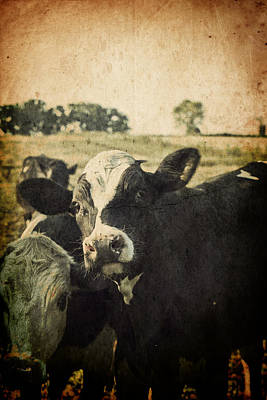 Photograph - Mooove by Joel Witmeyer
