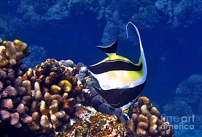Photograph - Moorish Idol On Reef by Bette Phelan