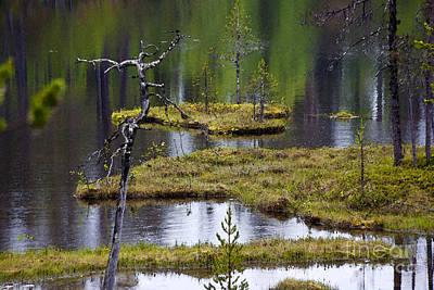 Everglades Digital Art - Moorland Scenery by Heiko Koehrer-Wagner