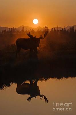 Photograph - Moose At Dawn - Yellowstone by Craig Lovell