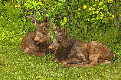 Moose Twins- Abstract Art Print by Tim Grams