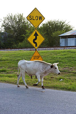 Cow Humorous Photograph - Mooving Along by Toni Hopper