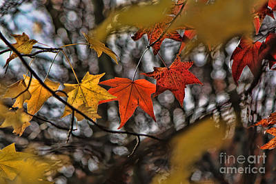 Photograph - More Autumn Leaves by Jeff Breiman