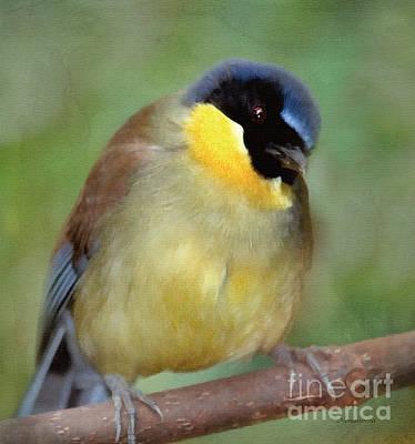 Mixed Media - Morning Bird Song by Georgiana Romanovna