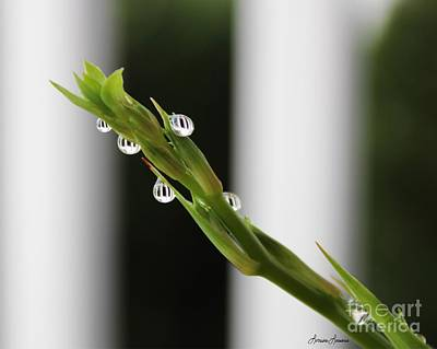Photograph - Morning Dew 1 by Lorraine Louwerse