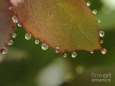 Photograph - Morning Dew by Nancy Greenland